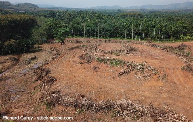 abgeholzter Regenwald